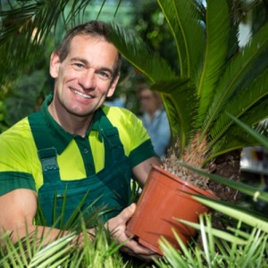 Садовник с пальмой в горшочке