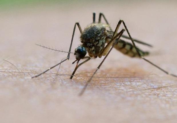 комар на теле человека