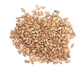 ячмень, зерно