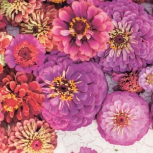 cvetochnyj-sad03