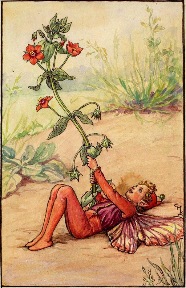 Фея алого первоцвета
