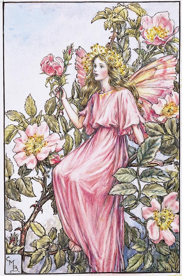 Фея шиповника, или дикой розы