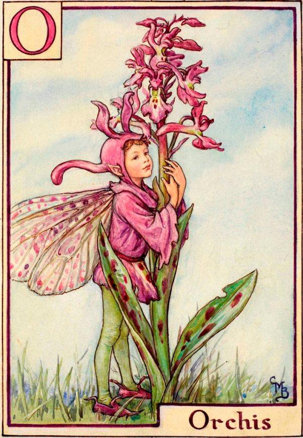 Цветочный алфавит. Фея орхидеи Сесиль Мэри Баркер