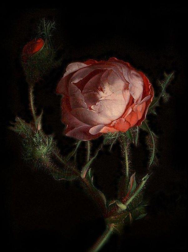 Роза-Рашель-Рюйш (1664-1750), нидерландская художница эпохи барокко