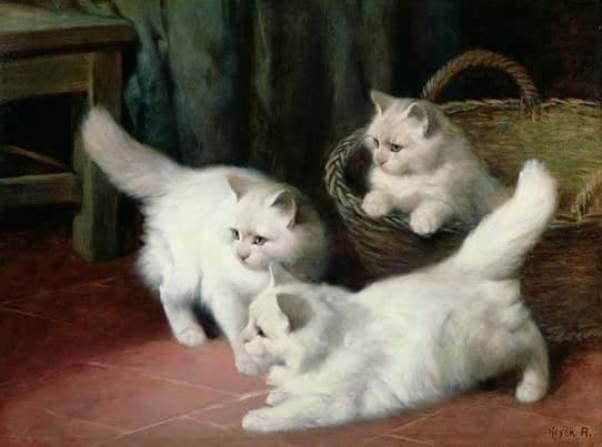 Tri-belyh-angorskih-kotjonka-Artur-Hejer