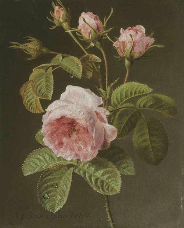 Веточка розовых роз. Жерар ван Спендонк (1746-1822), голландский художник