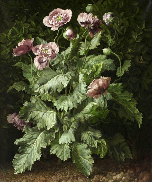 Маковое растение, Джеральд Купер (1898-1975), британский художник