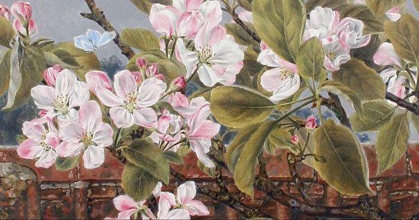 Яблоневый цвет и бабочка, 1864. Роза Бретт (1829-1882), британский художник