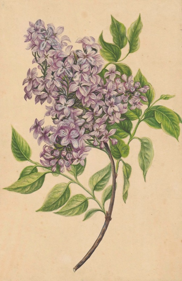 A twig of lilac (1810) Henryka Beyer