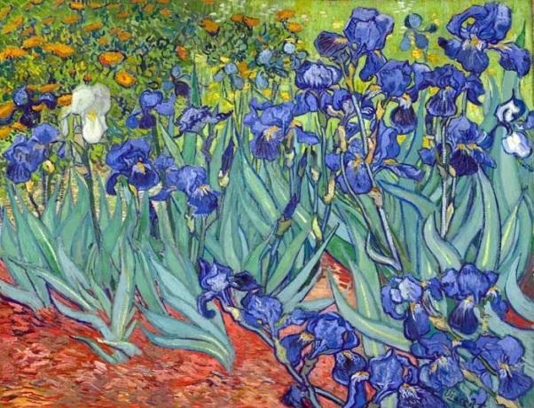 Ирисы, 1889. Холст, масло. Винсент Ван Гог (1853-1890), голландский художник. Музей Гетти