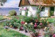 Деревенский дом с кустами роз у воды, 1934. Петер Мёрк Мёнстед